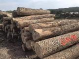 Forest And Logs - Ash Logs 12