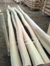 Spain Hardwood Logs - CE 140-160 mm Acacia Peeling Logs