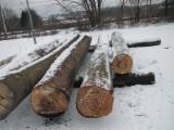 Forest and Logs - 28+ cm Beech Saw Logs