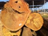 Belgium Hardwood Logs - Ipe Logs 50-100 cm