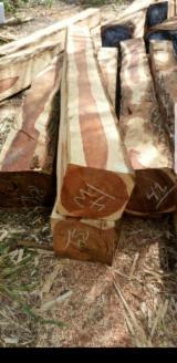 Honduras - Fordaq Online market - Teak / Cocobolo / Mahogany Square Logs