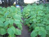 Greece - Furniture Online market - Needed Partners to invest in Paulownia Growing in Greece.