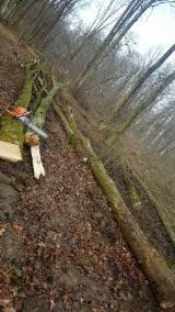 Forstlichen Dienstleistungen - Motormanueller Holzeinschlag, Kroatien