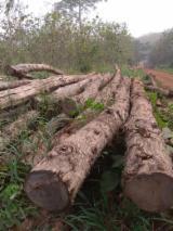 Schnittholzstämme, Teak