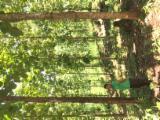 Лес И Пиловочник Южная Америка - Колумбия, Тик