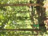 Лісисті Місцевості Для Продажу - Колумбія, Тікове Дерево