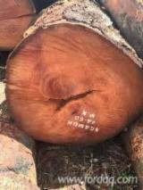 Pyinkado Hardwood Logs - Pyinkado Logs 80+ cm