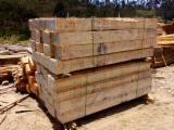 托盘-包装及包装材 南美洲  - 湿地松, Radiata Pine , 火炬松, 45 m3 per month