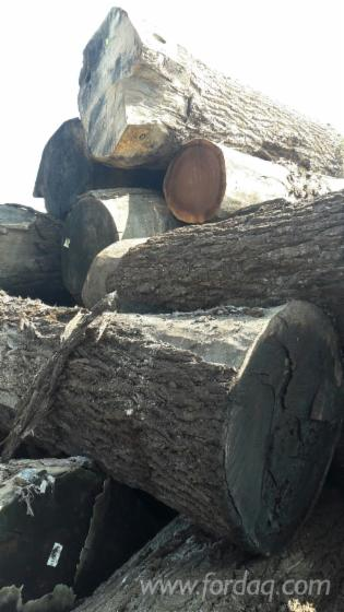 Black-Walnut-Logs-for