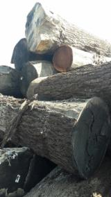 Black Walnut Logs for Slabs