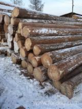 Siberian Larch Softwood Logs - Siberian Larch Logs 14 cm