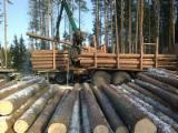 Softwood Logs for sale. Wholesale Softwood Logs exporters - Spruce 1-2 Saw Logs 16-48 cm