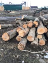 Russia Hardwood Logs - Beech Saw Logs 40 cm