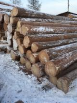 Siberian Larch Softwood Logs - Siberian Spruce / Larch / Pine Logs 14+ cm
