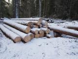 Meko Drvo  Trupci Za Prodaju - Za Rezanje, Bor  - Crveno Drvo