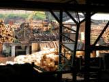 Grumes Équarries à vendre - Vend Grumes Équarries Radiata  Sierra
