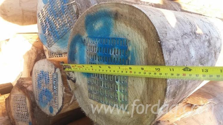 Vender Troncos Serrados Eucalipto Chile