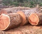 Fordaq wood market - Azobe / Doussie / Tali Logs 90,100,120,150 cm