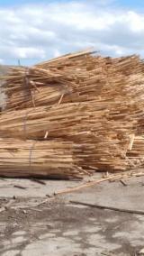 Aşchii De Lemn - Tivitura lemn de fag pt foc - 180 lei