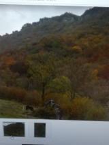 Tronchi In Piedi Rovere - Vendesi in zona Valle Imagna ( BG )porzione di bosco con buona legna da taglio.