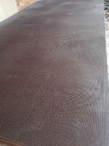 上Fordaq寻找最佳的木材供应 - Linyi Huabao Import and Export Co.,Ltd - 覆膜胶合板(棕膜), 桉树