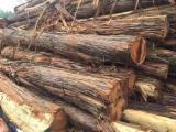 null - Australian Campbell Acacia Veneer Logs 15-30 cm