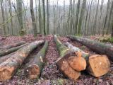 Germany Hardwood Logs - 40+ cm Beech Saw Logs