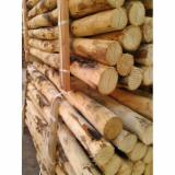 Northern White Cedar Softwood Logs - FSC Western Red / Northern White Cedar Stakes 4-10 cm