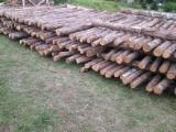 Cylindrical Trimmed Round Wood - Northern White Cedar Stakes 3-5 cm