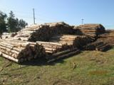 null - Northern White Cedar Stakes, 3-5 cm