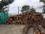 Mexico Hardwood Logs - Granadillo Industrial Logs 24 cm