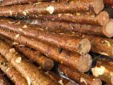 Grumes De Sciage à vendre - Vend Grumes De Sciage Pin  - Bois Rouge
