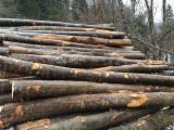 Hardwood Logs For Sale - Register And Contact Companies - Beech Firewood Logs 12-32 cm