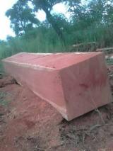 Portugal - Furniture Online market - Tali / Doussie / Iroko Square Logs 60+ cm