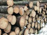 Forest and Logs - ABC Spruce Logs, diameter 18+ cm