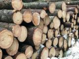 Grumes De Sciage à vendre - Vend Grumes De Sciage Epicéa  - Bois Blancs