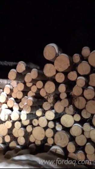 锯木, 云杉, 落叶松, 苏格兰松
