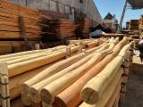 Türkei - Fordaq Online Markt - Stämme Für Die Industrie, Faserholz, Robinie