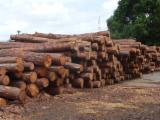 Softwood  Logs For Sale - Pitch Pine Logs 17+ cm