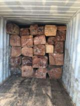 Singapore Hardwood Logs - Doussie Square Logs 50+ cm