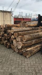 Teak Hardwood Logs - 25+ 30+ cm Teak Saw Logs from Ecuador, Costa