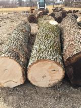 "Forest and Logs - White Ash logs, 2SC & Better, 10"" and larger"