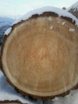Meko Drvo  Trupci Za Prodaju - Za Rezanje, Sibirski Ariš