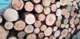 Drewno Iglaste  Kłody Na Sprzedaż - Kłody Przemysłowe, Sosna Zwyczajna  - Redwood, Świerk  - Whitewood, FSC