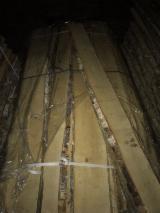 Unedged Hardwood Timber - Nils Trapans