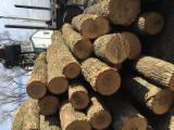 Forêts Et Grumes Amérique Du Nord - Vend Grumes De Sciage Frêne Ontario