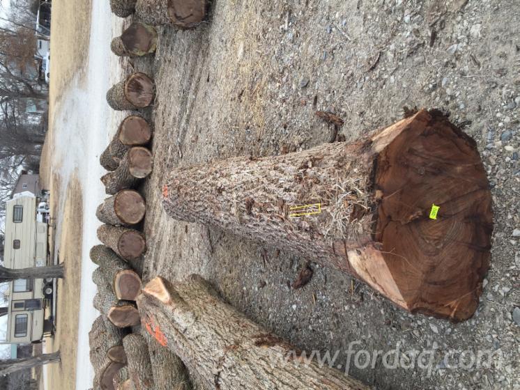 Kaster-Logging-Limited