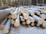 Aspen, White Poplar  Hardwood Logs - Aspen Logs 18-22; 22-34; 36+ cm
