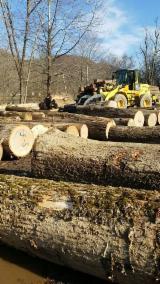 Păduri Şi Buşteni America De Nord - Vand Bustean De Gater Arțar , Stejar Roșu, Stejar Alb in Birch River, WV