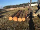 USA Softwood Logs - SYP Logs, diameter 15-30 cm